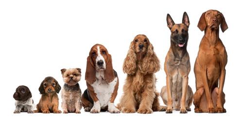 azil za pse ljig